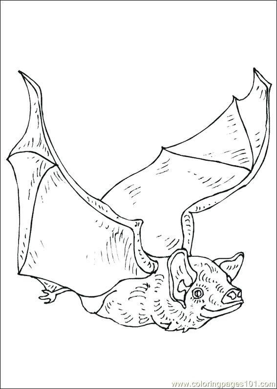 567x794 Bats Coloring Pages Kids Coloring Bat Coloring Pages Free Bats