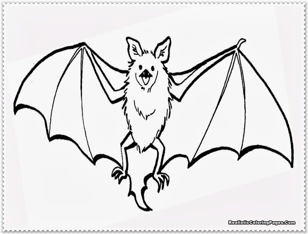 1066x810 Excellent Bat Coloring Pages Realistic With Bat Coloring Pages