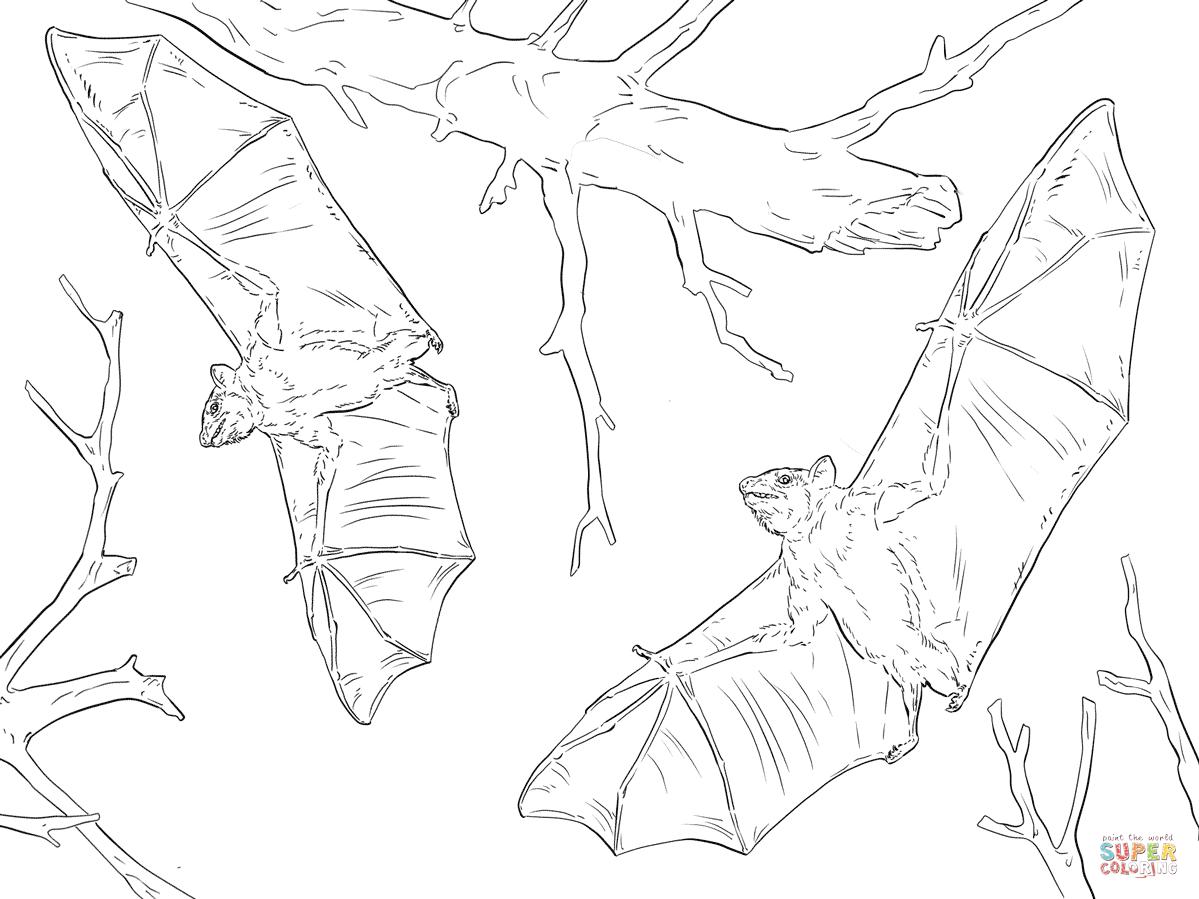 1199x899 Bat Coloring Pages