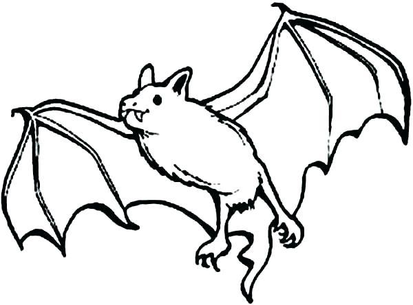 600x444 Bat Coloring Page Bat Coloring Pages Realistic Bats Coloring Pages