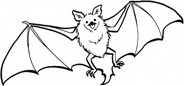 600x282 Bat Coloring Page