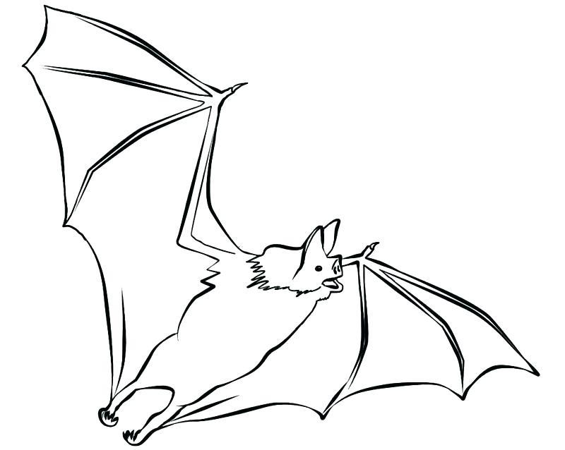 800x638 Printable Baseball Bat Coloring Pages Bats Page