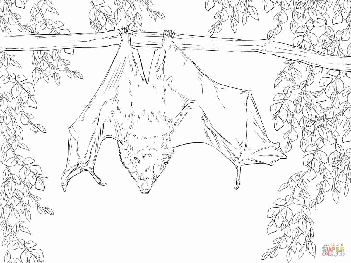 1199x899 Rodrigues Fruit Bat Coloring Page Free Printable Pages Brilliant