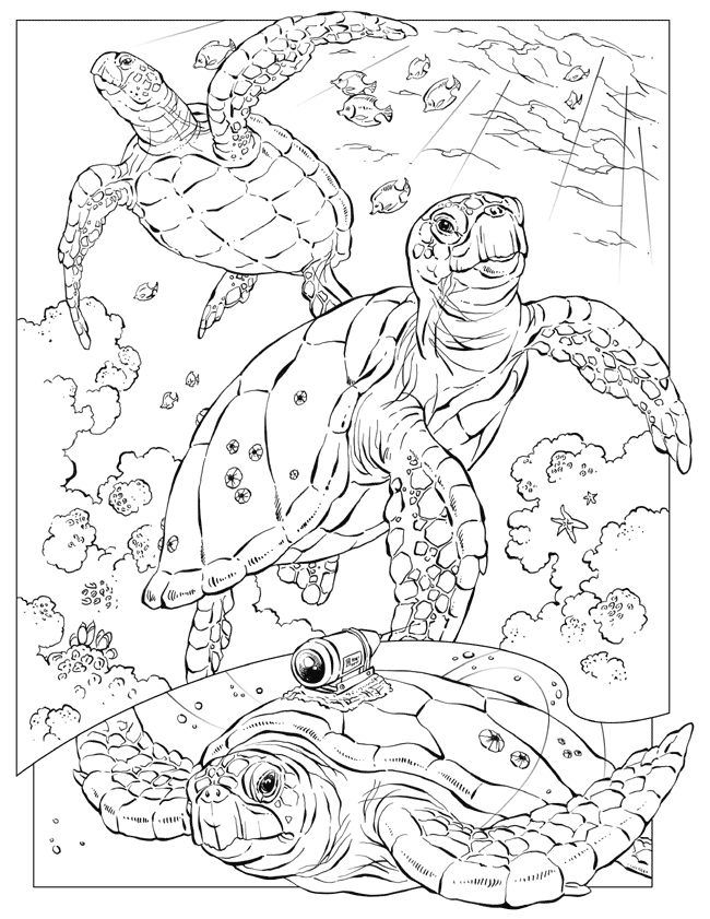 Beach Items Coloring Pages