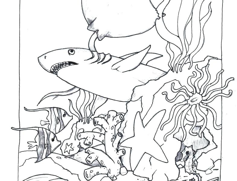 785x600 Sunrise Coloring Page