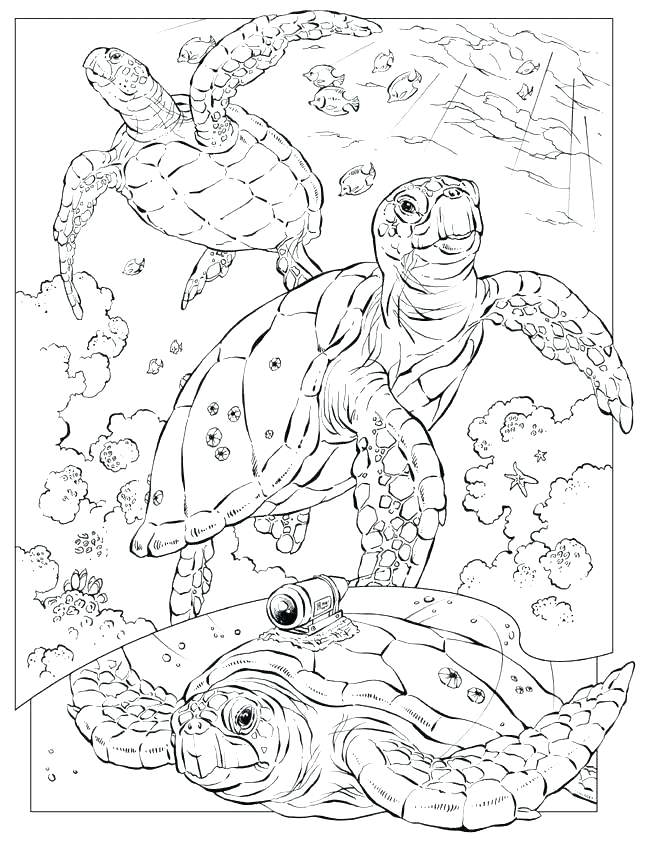 650x841 Free Ocean Coloring Pages Ocean Coloring Pages For Adults These