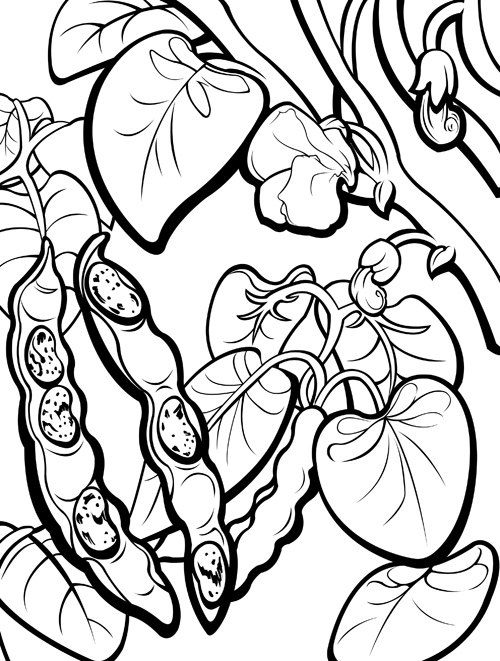 500x661 Pinto Bean Coloring Page Happy Bean Day! Pinto