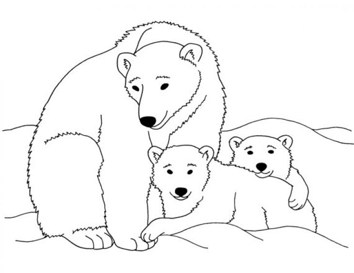 730x563 Polar Bear Coloring Pages Printable
