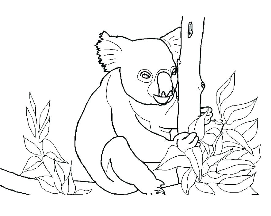 884x706 Koala Coloring Page Koala Coloring Page Koala Bear Coloring Pages