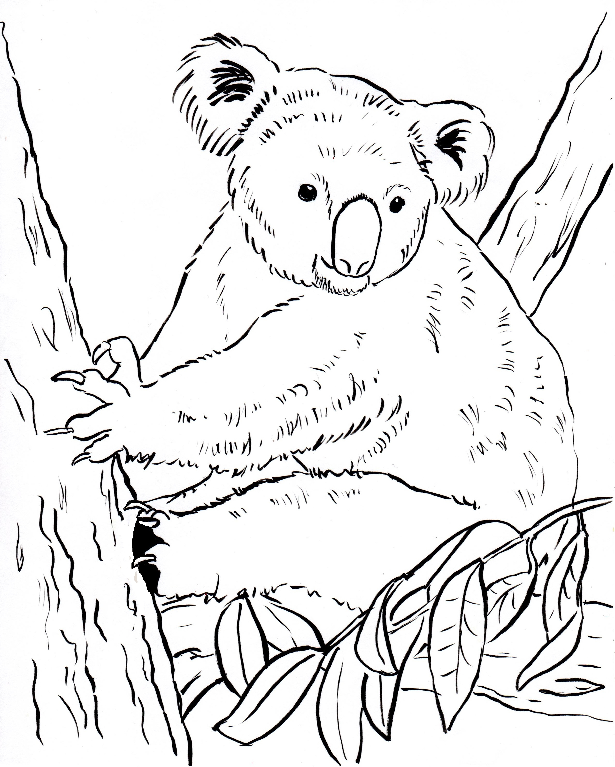 2540x3168 Realistic Koala Coloringages Free For Adults Bear Baby Wonderful