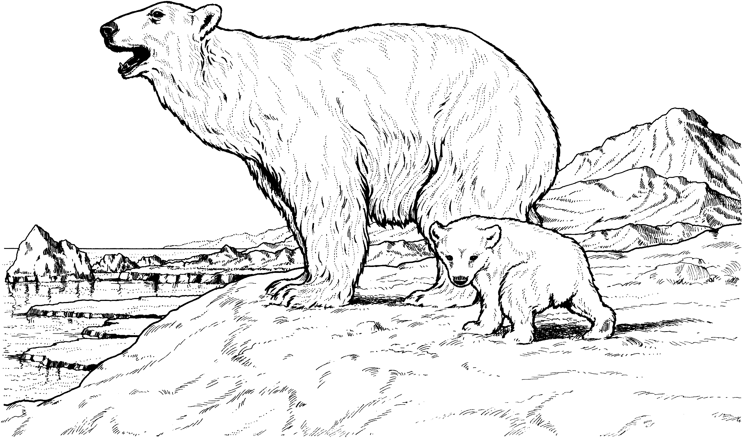 3018x1780 Adult Coloring Pages Of Polar Bear Printable