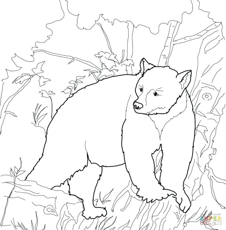 728x743 Black Bear Coloring Pages Black Bear Coloring Pages Coloring Bear