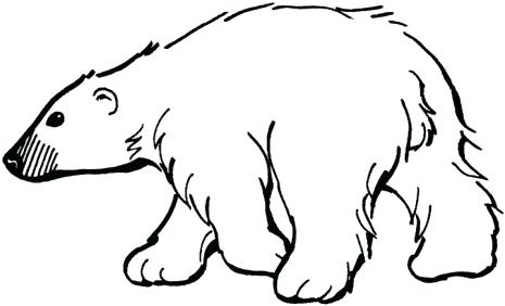 465x282 Coloring Polar Bear Coloring Pages Printable Throughout Free