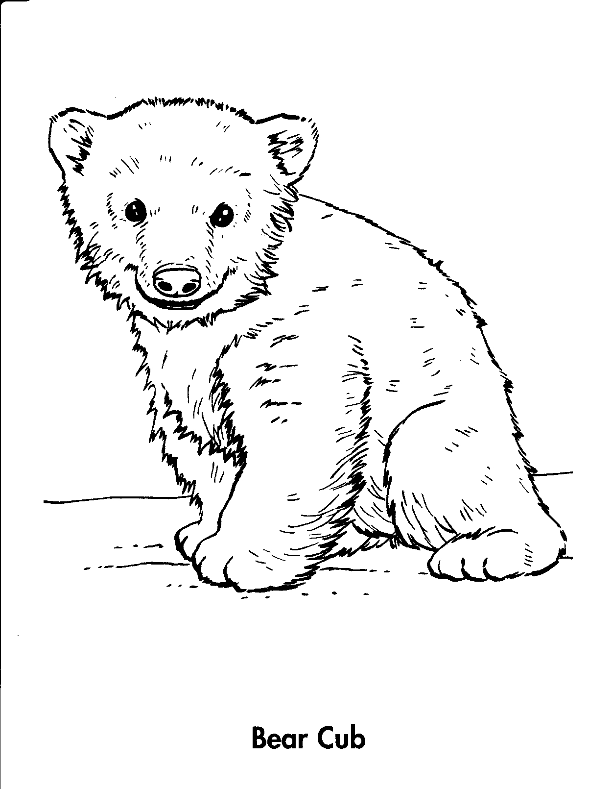 1250x1610 Bear Cub Coloring Pages Animals Cubs Related K