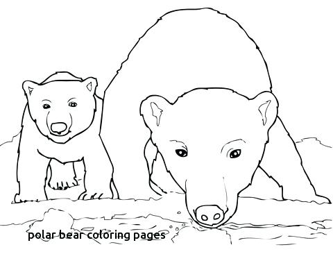 480x389 Bear Cub Coloring Pages Curious Polar Bear Mother And Cub Coloring