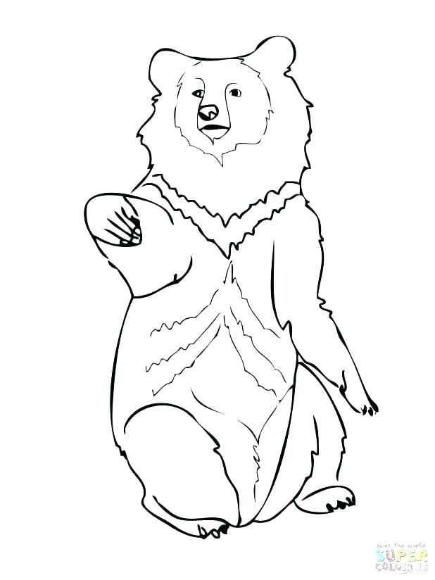 618x824 Black Bear Coloring Page Fresh Bear Face Coloring Page For Black