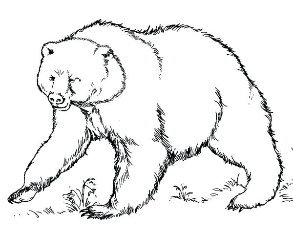 600x479 Brown Bear Coloring Page Brown Bear Ready To Fight Coloring Pages