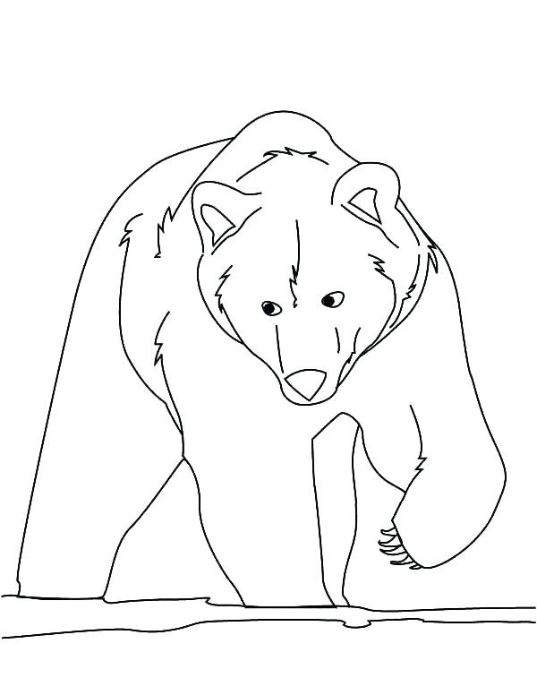 600x776 Brown Bear Coloring Pages Brown Bear Coloring Brown Bear Coloring