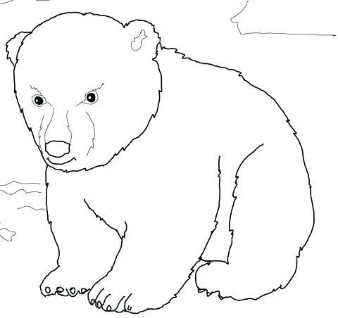 480x452 Polar Bear Coloring Pages Printable Polar Bear Coloring Pictures