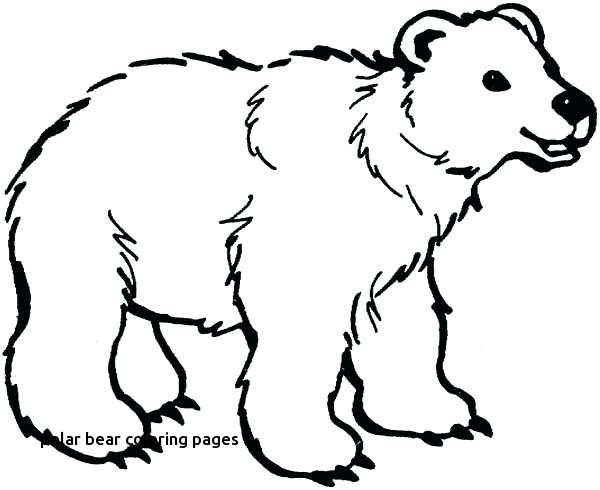 600x490 Bear Face Coloring Page Little Brown Pages What Do You See Twit