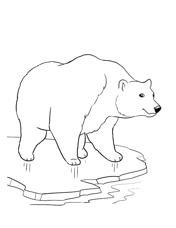 600x776 Bear Face Coloring Pages Polar Book Page Bears Of Pin