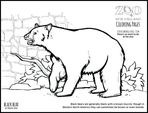 608x467 Black Bear Coloring Pages Coloring Pages Black Bear Coloring Page