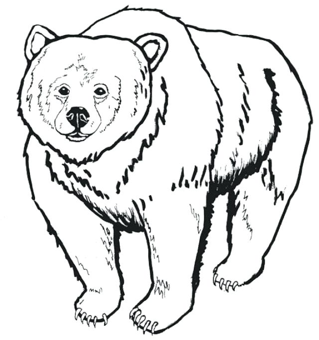 640x683 Bear Family Coloring Pages