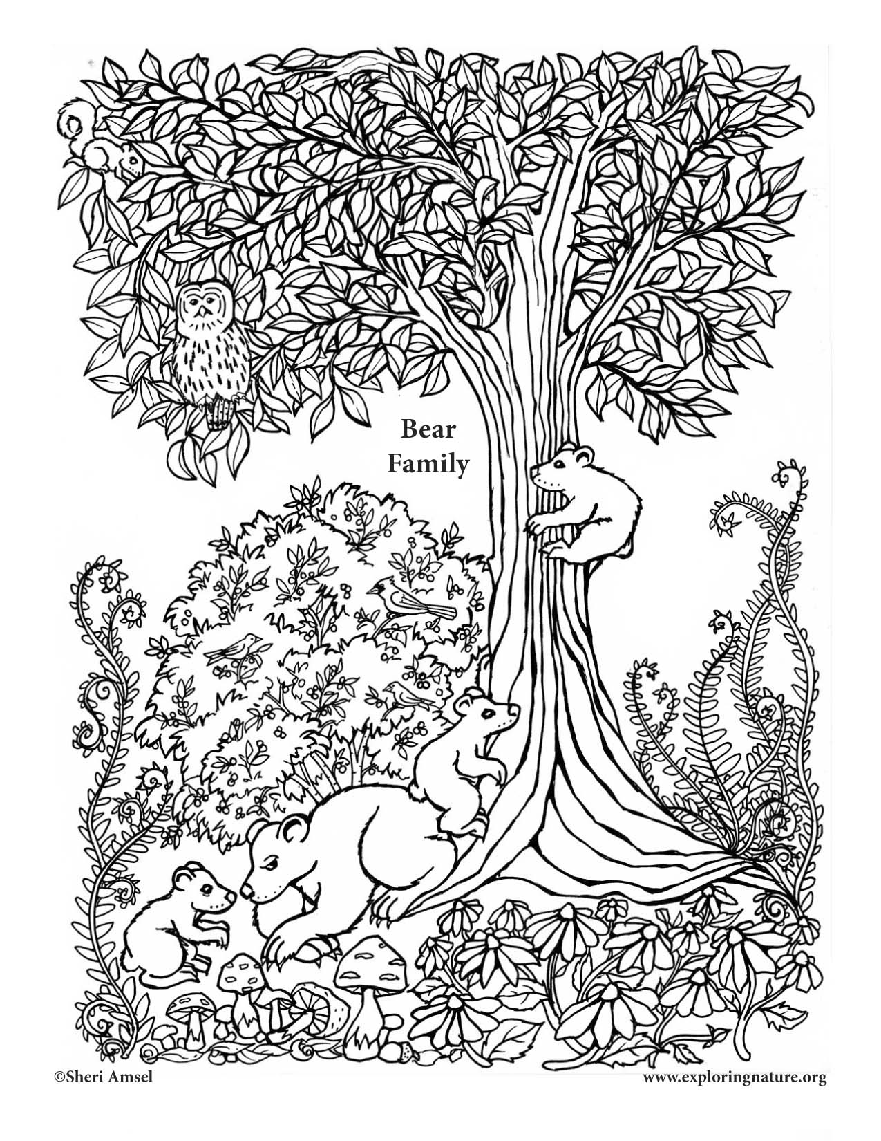 1275x1650 Bear Family Coloring Page