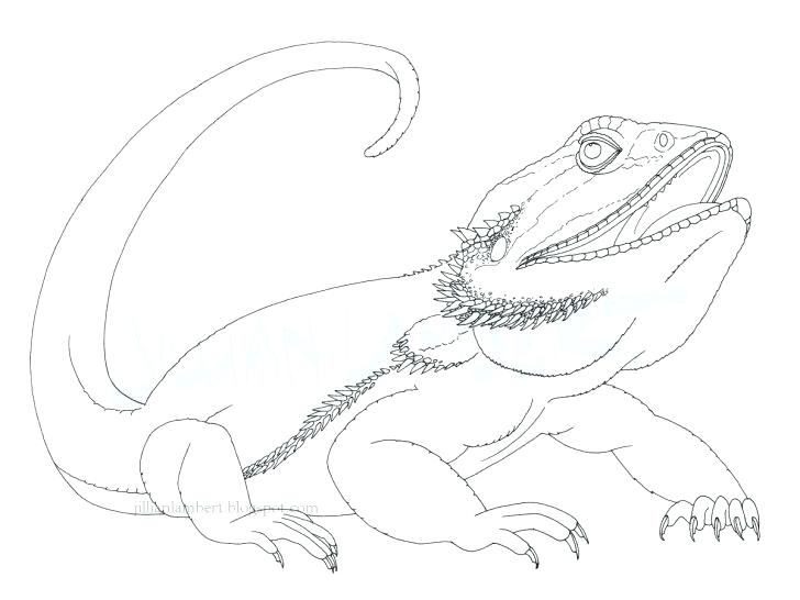 728x546 Dragon Coloring Pages Dragons Coloring Pages Nice Baby Dragon