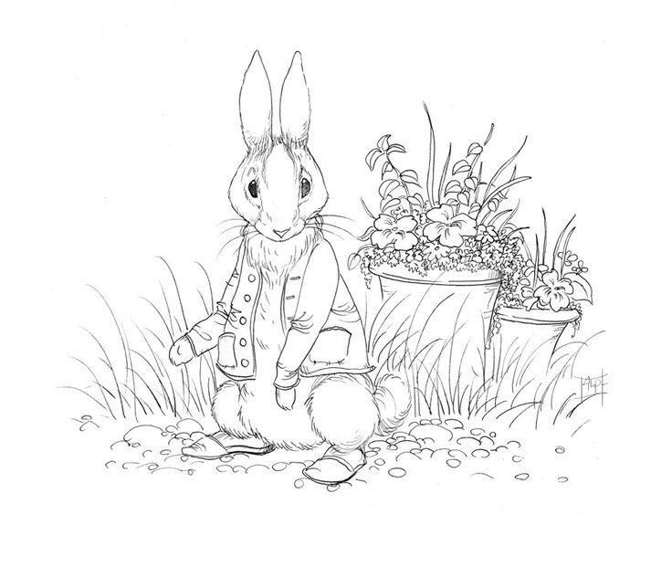 736x621 Best Beatrix Potter Colouring In Pictures Images