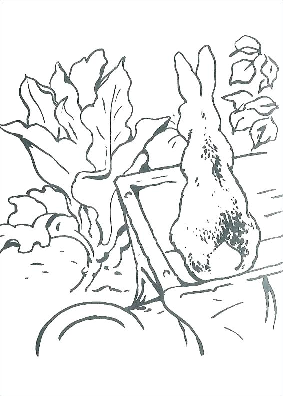 567x794 Peter Rabbit Coloring Pages Page In Nickelodeon Peter Rabbit