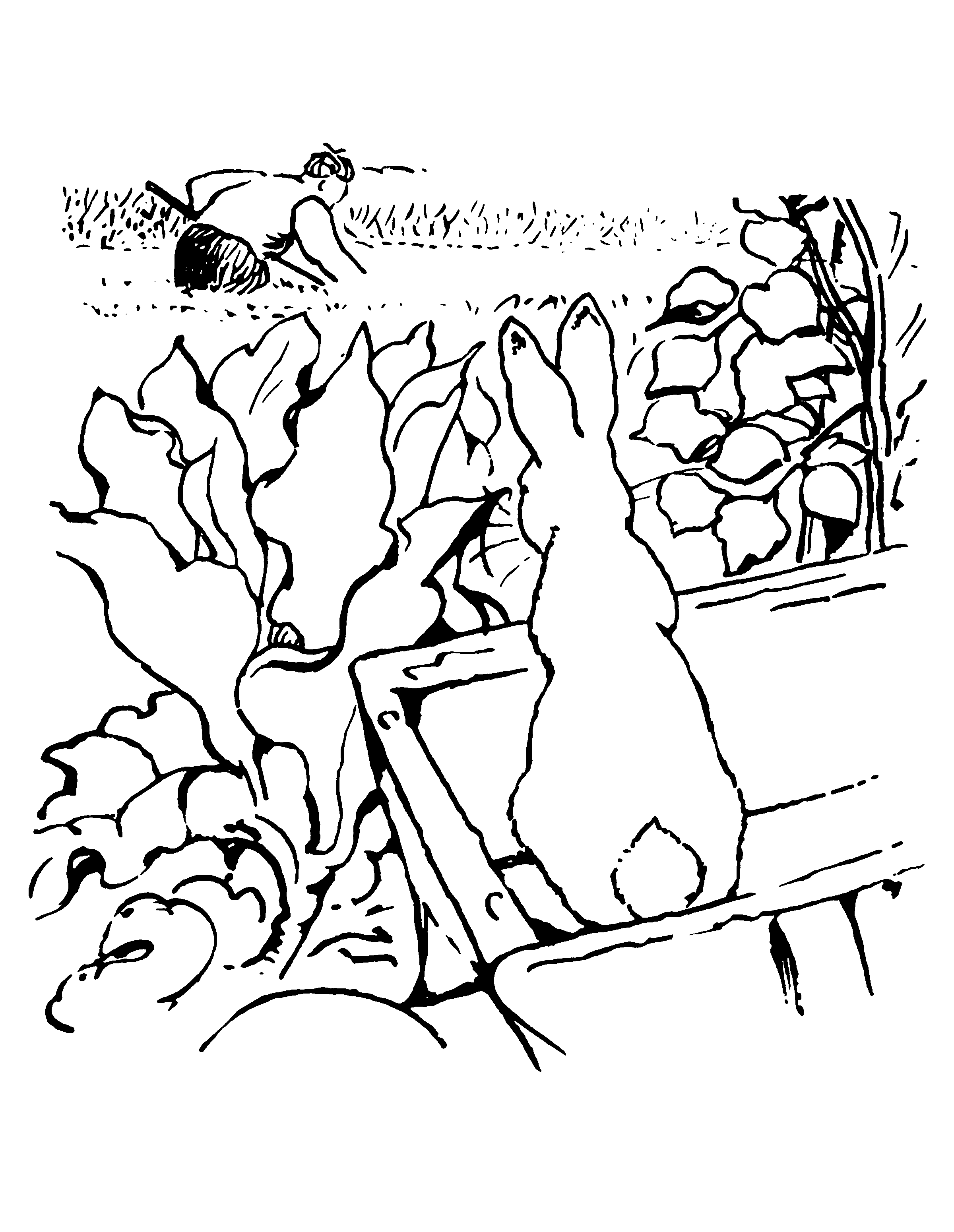 2400x3100 Beatrix Potter Coloring Pages