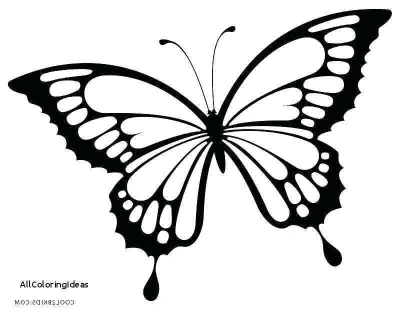800x620 Butterfly Coloring Pages For Adults Beautiful Butterfly Coloring