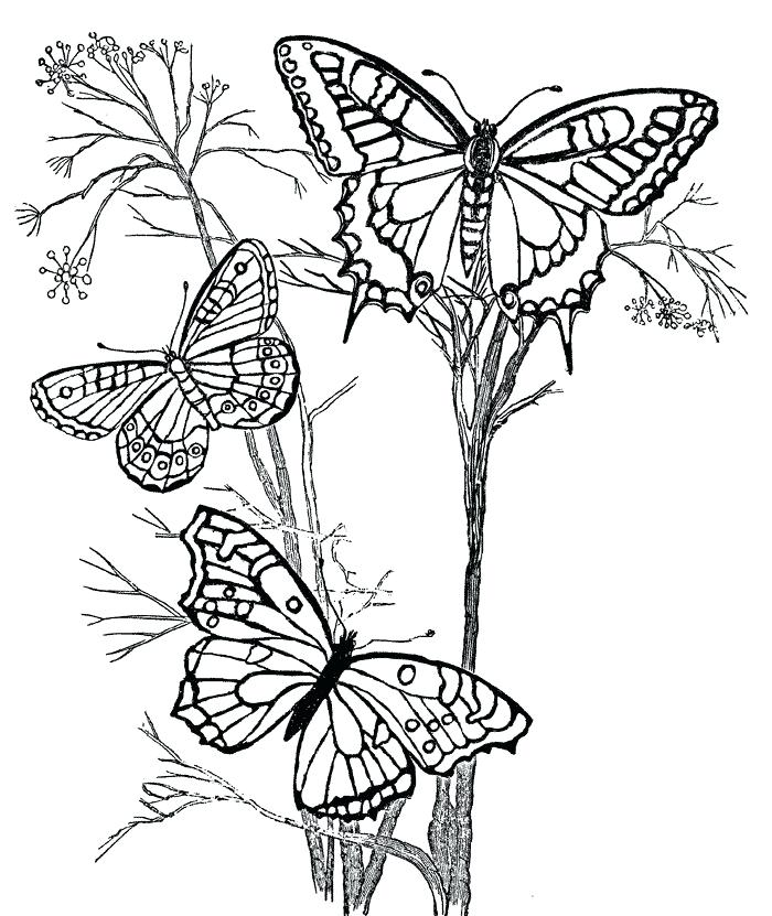 700x831 Coloring Pages Butterfly Coloring Pages Flowers And Butterflies