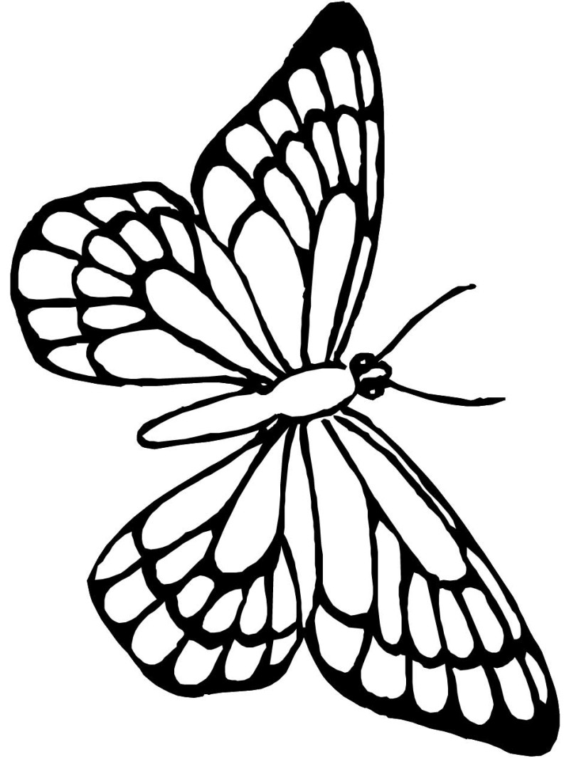 800x1066 Butterfly Coloring Pages