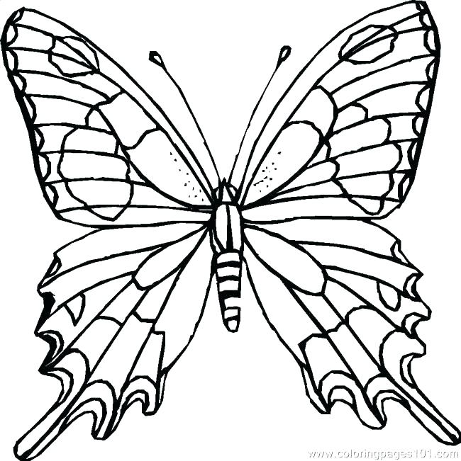 650x651 Beautiful Butterfly Coloring Pages Butterfly Coloring Page