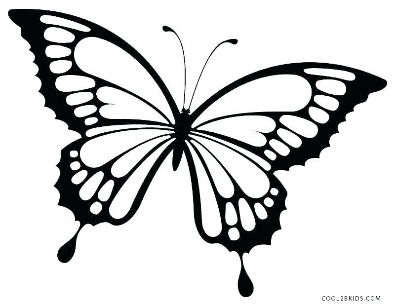 800x620 Beautiful Butterfly Coloring Pages Printable Butterfly Coloring