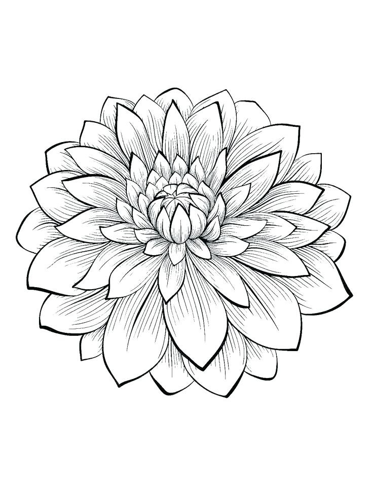 This is a graphic of Free Printable Flower Coloring Pages for Adults within different