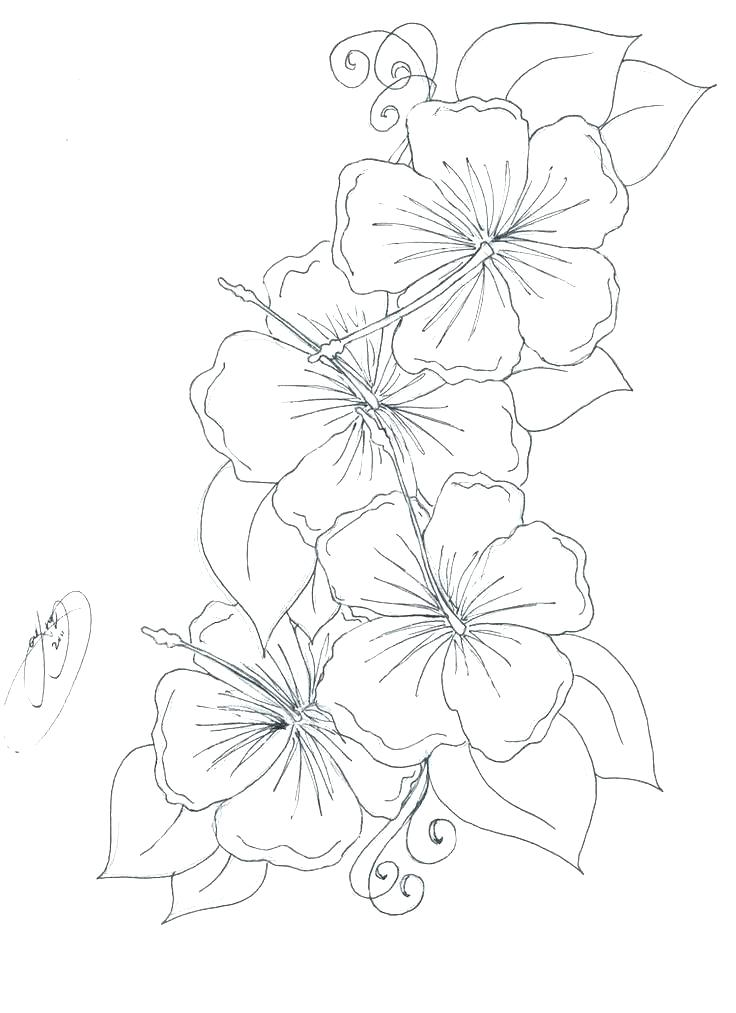 736x1013 Realistic Flower Coloring Pages Hibiscus Flower Coloring Pages