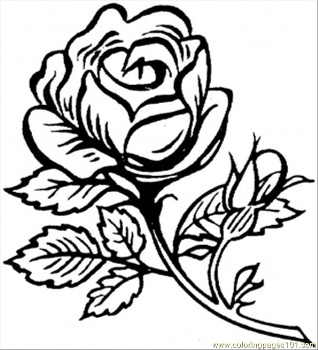 650x715 Beautiful Big Rose Coloring Page