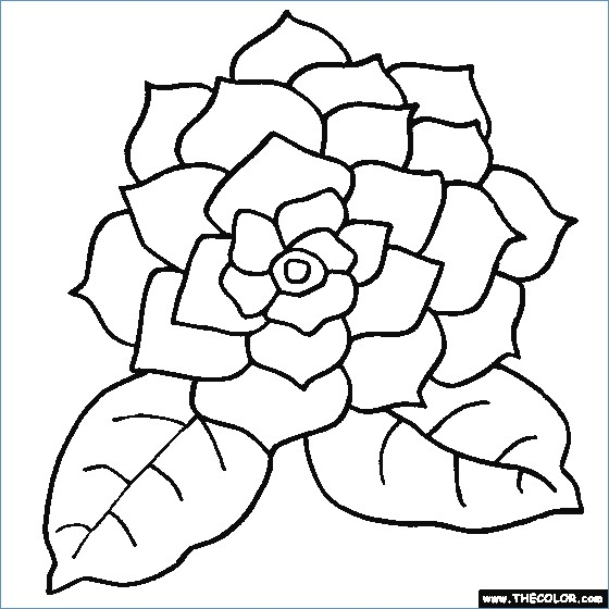 560x560 Beautiful Flower Coloring Pages