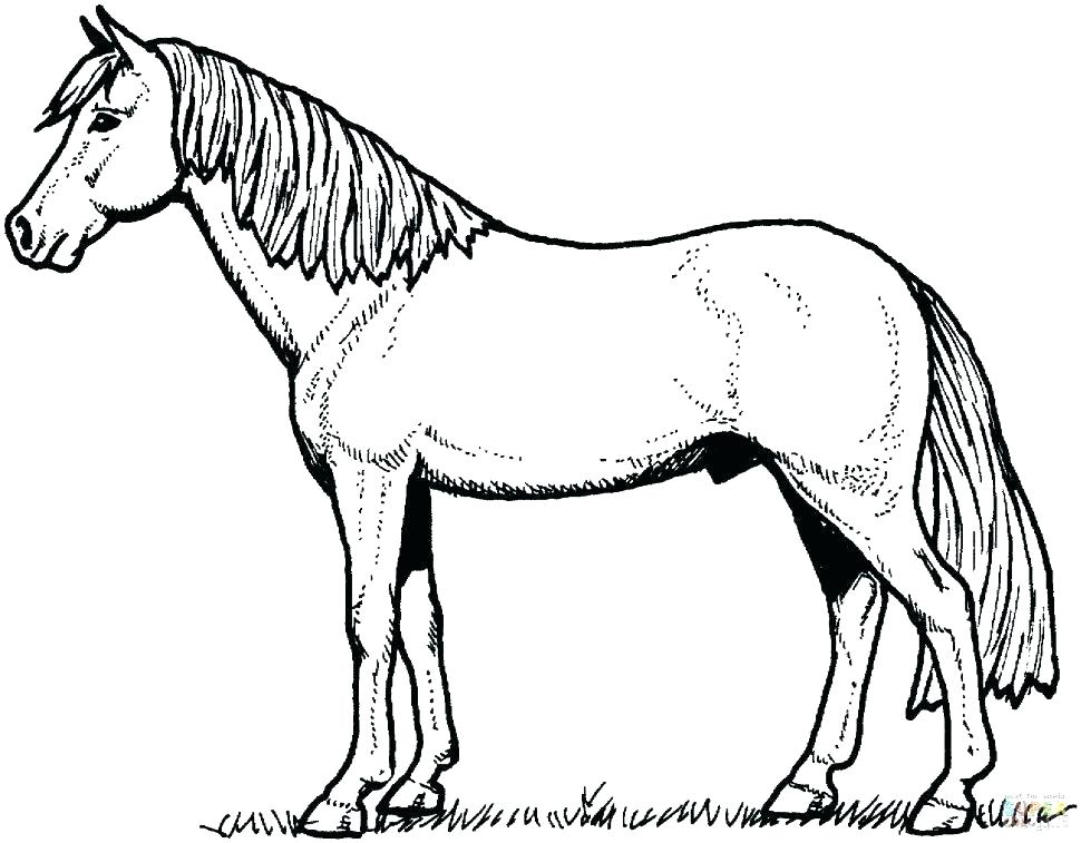 970x757 Horse Color Page Mustang Horse Coloring Pages Horses Coloring
