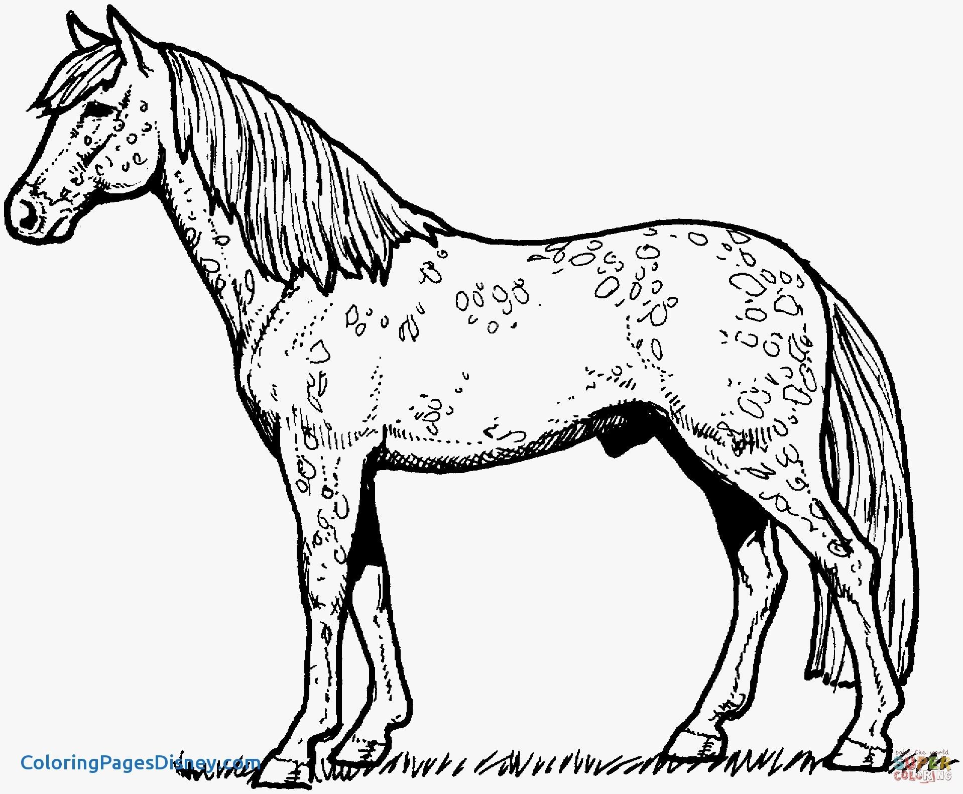 1918x1581 Horses Coloring Pages Beautiful Horses Coloring Pages