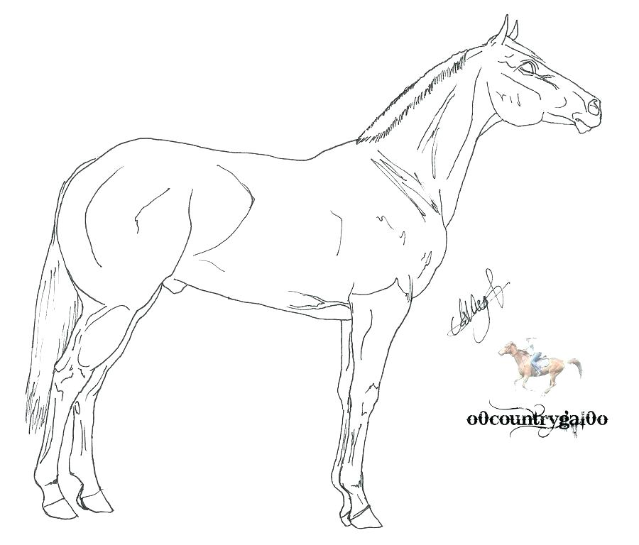 900x768 Beautiful Horse Coloring Pages