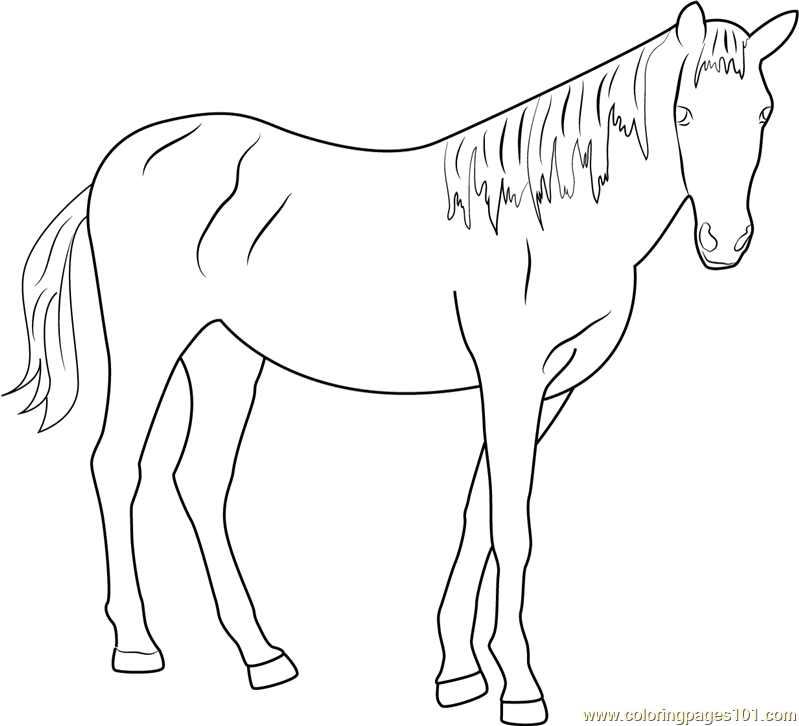799x726 Beautiful Horse Coloring Page