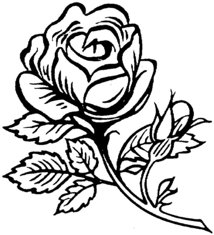 437x480 Pretty Rose Coloring Pages
