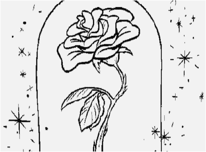 827x609 Coloring Pages Roses Image Beauty And The Beast Rose Coloring