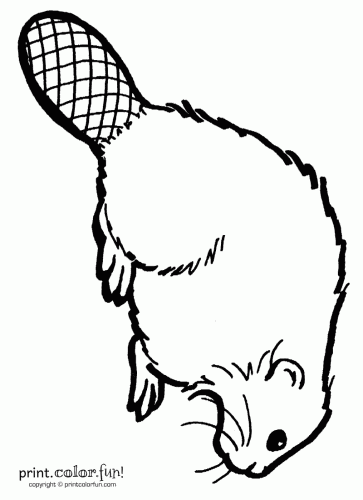 363x500 Beaver Coloring Page