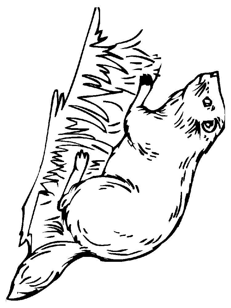 750x1000 Beaver Coloring Pages For Kids