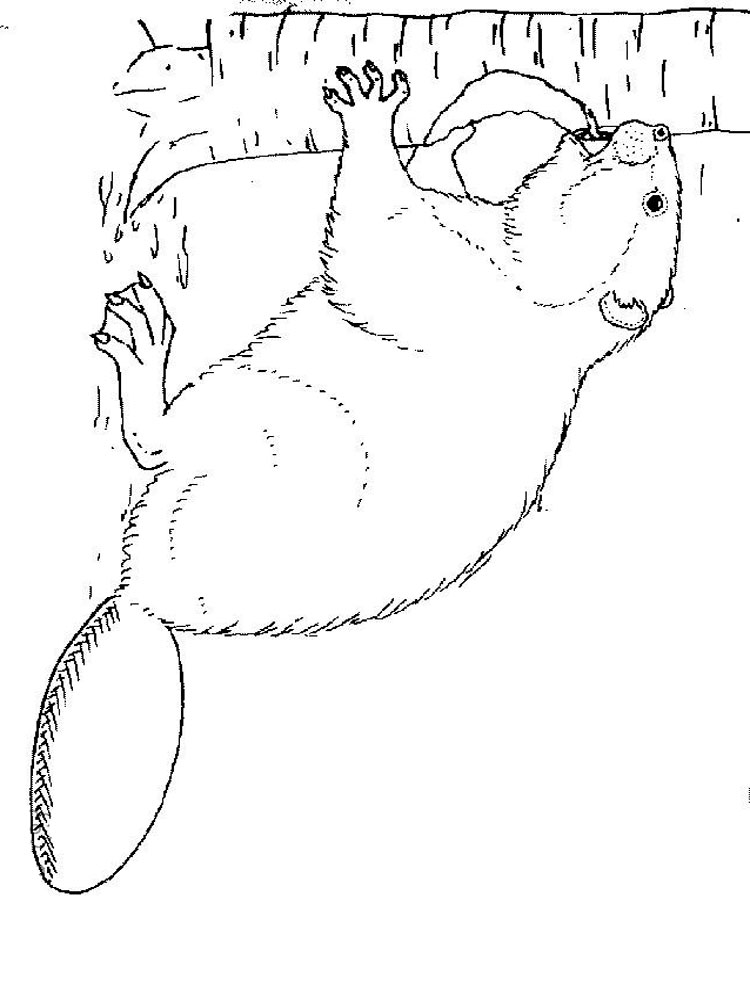 750x1000 Beaver Coloring Pages Download And Print Beaver Coloring Pages